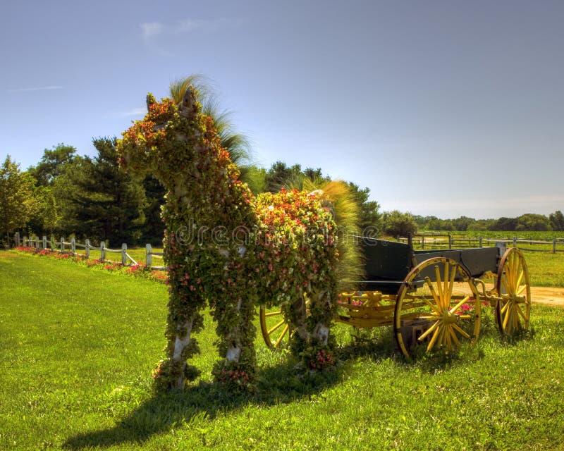 Gebloeid paard (mg_0030_1_2_) stock afbeelding
