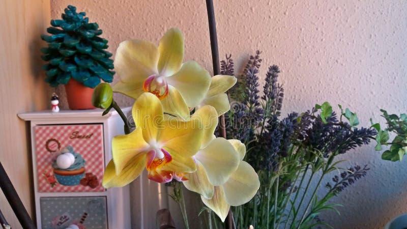 Gebloeide orchidee in een hoekje van het huis stock foto