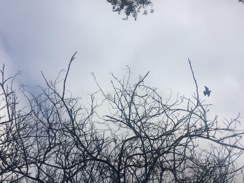 Gebogen boomboomstammen en vogels bruin op het groene gebied stock afbeeldingen