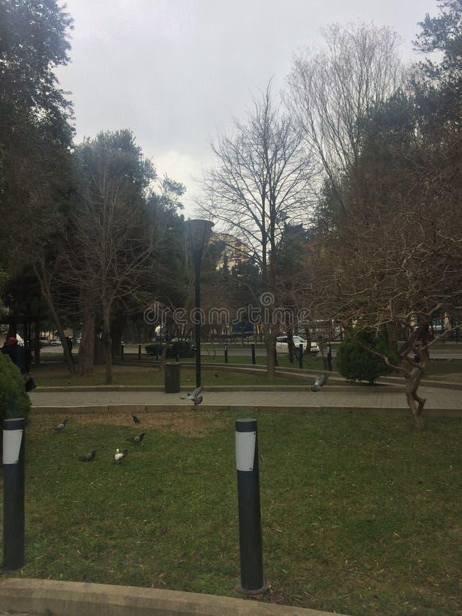 Gebogen boomboomstammen en vogels bruin op het groene gebied royalty-vrije stock afbeeldingen