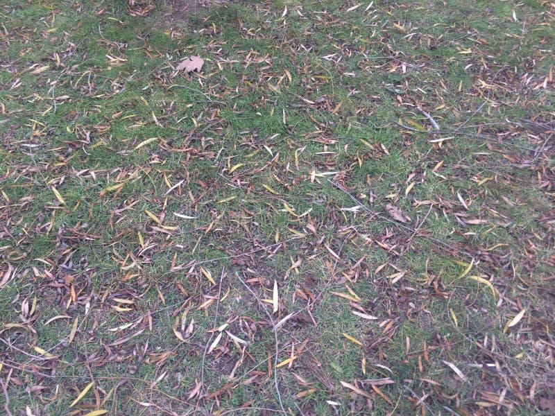 Gebogen boomboomstammen en vogels bruin op het groene gebied stock foto