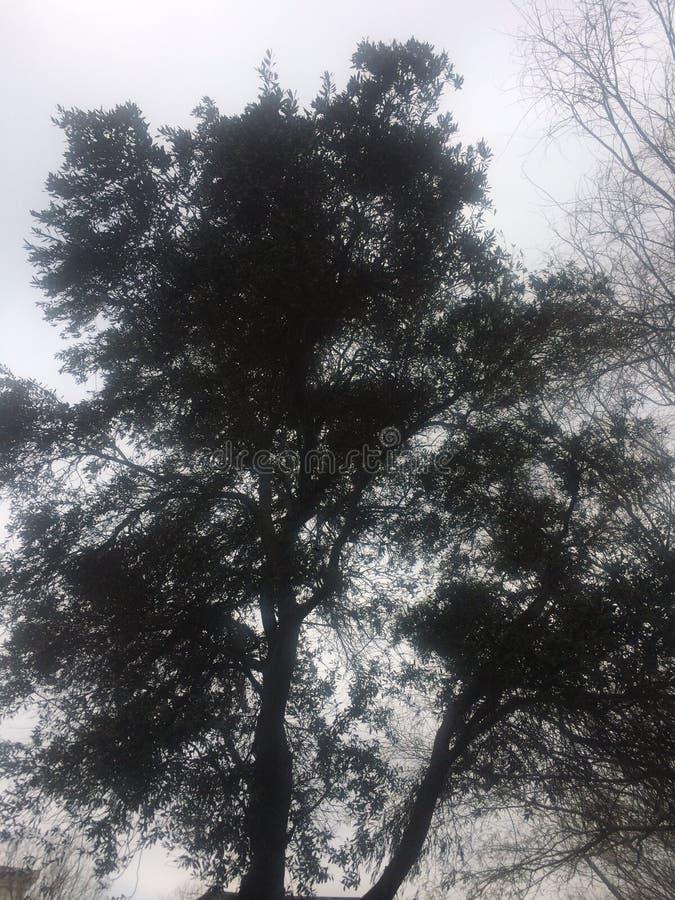 Gebogen boomboomstammen en vogels bruin op het groene gebied royalty-vrije stock foto's