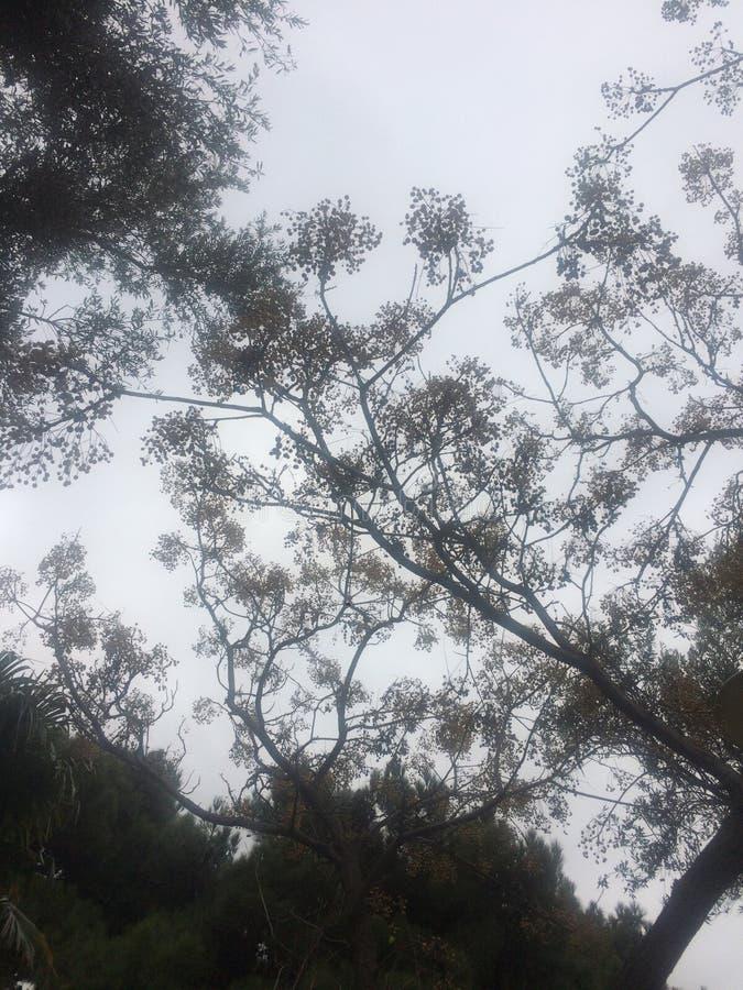 Gebogen boomboomstammen en vogels bruin op het groene gebied royalty-vrije stock foto