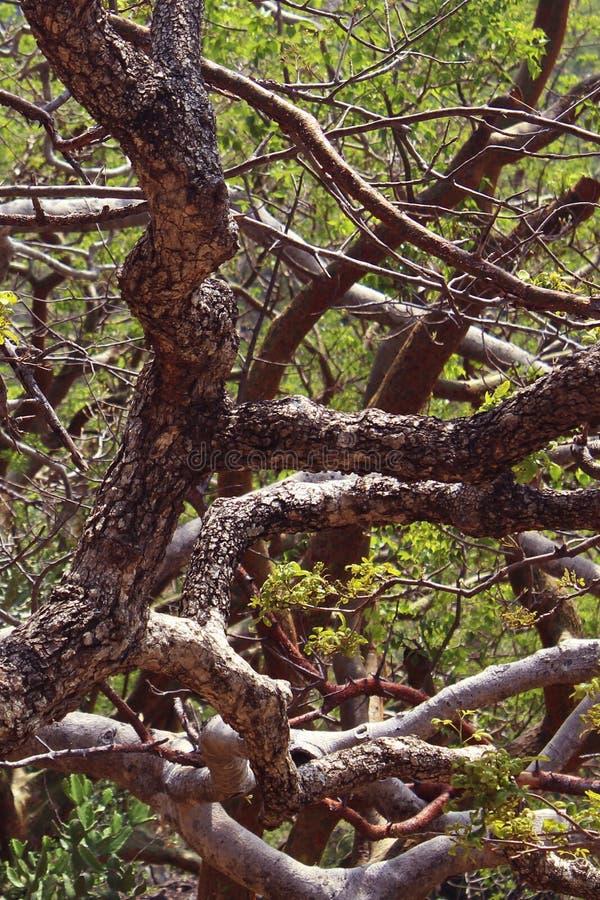 Gebogen boomtakken stock afbeelding