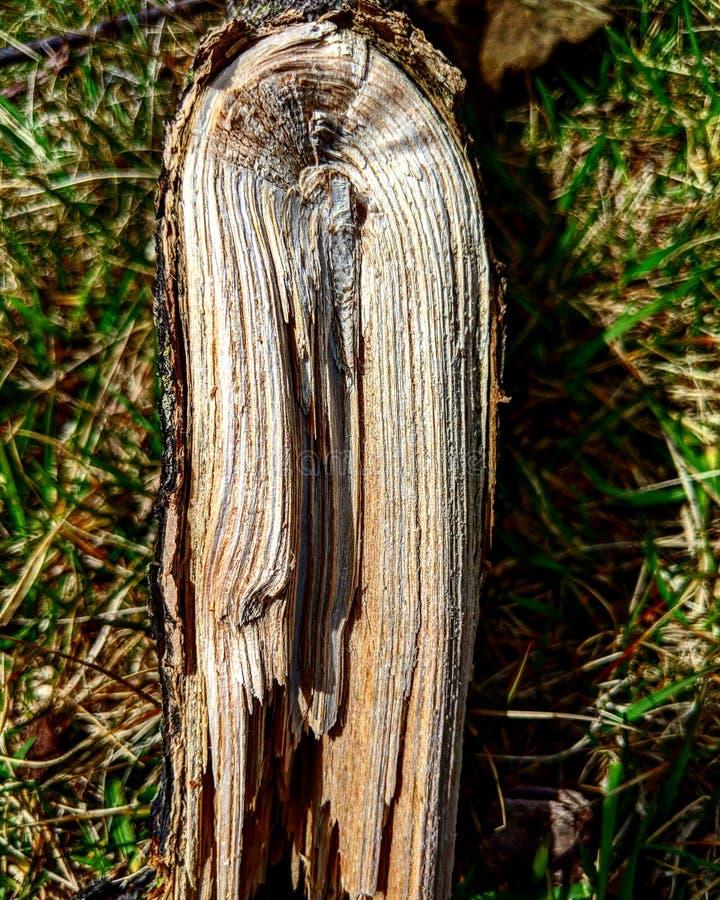 Gebogen hout stock foto's
