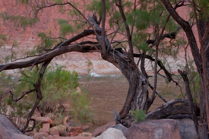 Gebogen houten boog bij de bank van de Rivier van Colorado in Grand Canyon stock fotografie