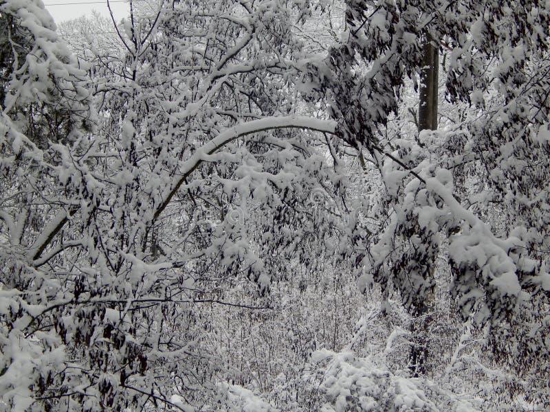 Gebogen takken onder het gewicht van sneeuw royalty-vrije stock afbeeldingen