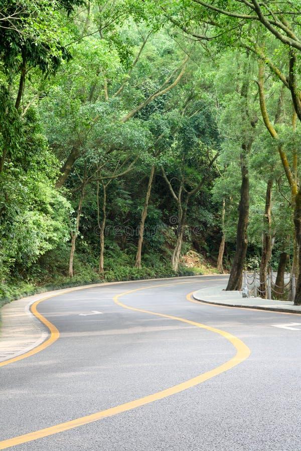 Gebogen weg met bomen stock afbeelding