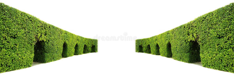 Gebogene Wand der grünen Hecke lizenzfreie stockbilder