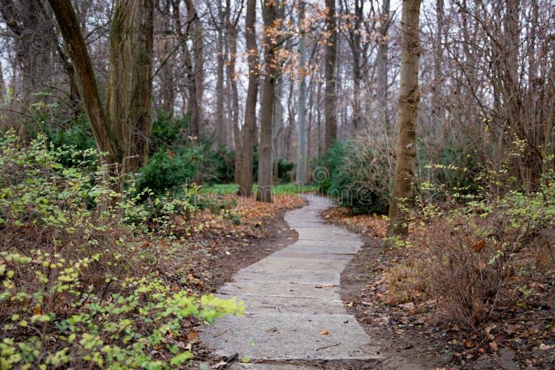 Gebogener Fußweg im Park von Berlin Germany Ruhige Landschaft mit niemandem in der Herbstsaison Bürgersteig durch Bäume des Walde lizenzfreies stockbild