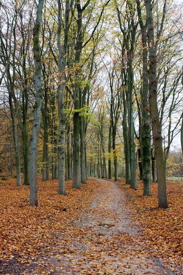 Gebogener Waldweg im Fall lizenzfreie stockfotos