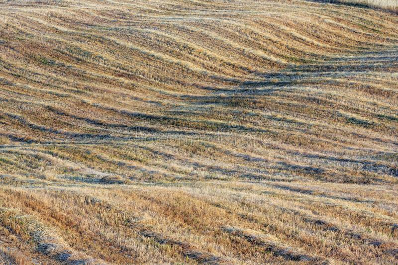 Gebogenes hügeliges Weizenfeld in Toskana lizenzfreie stockfotos