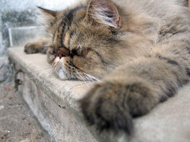 Gebohrte Katze stockfotos