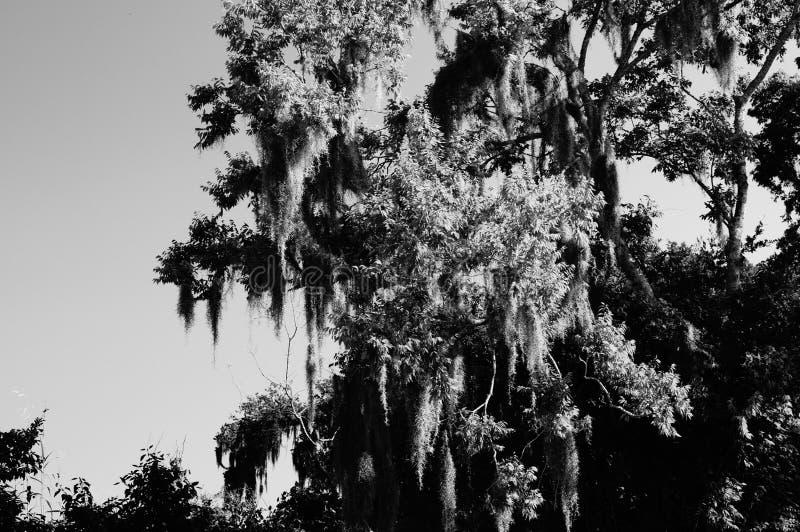 Geboren op Bayou stock afbeeldingen