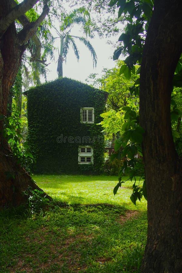 Gebouwen met witte die vensters met groene boomwijnstokken worden behandeld stock foto