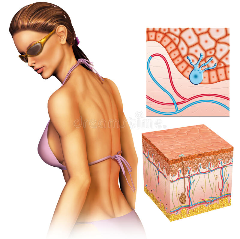 Gebräunte Haut lizenzfreie abbildung
