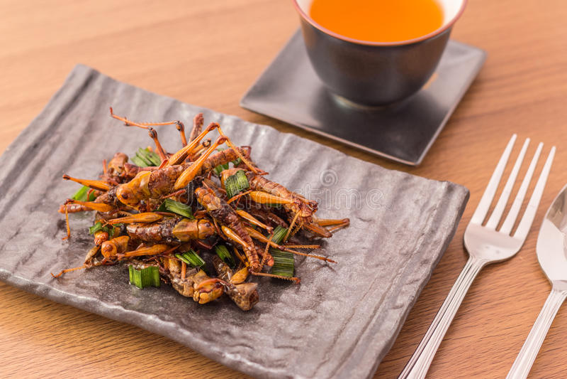 Gebraden insecten royalty-vrije stock foto