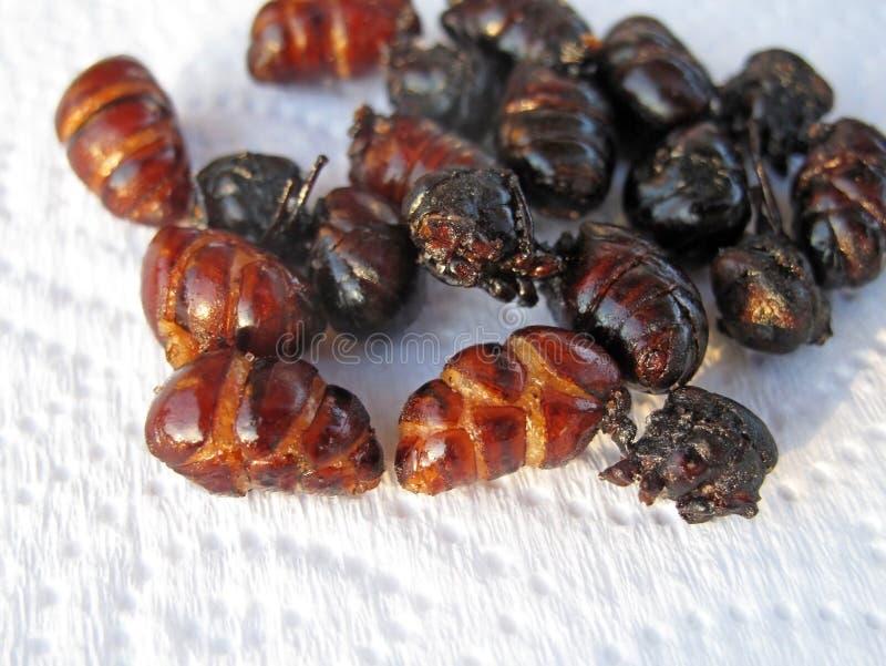 Gebraden mieren om als speciale delicatesse in Barichara, Colombia, Zuid-Amerika te eten royalty-vrije stock foto's