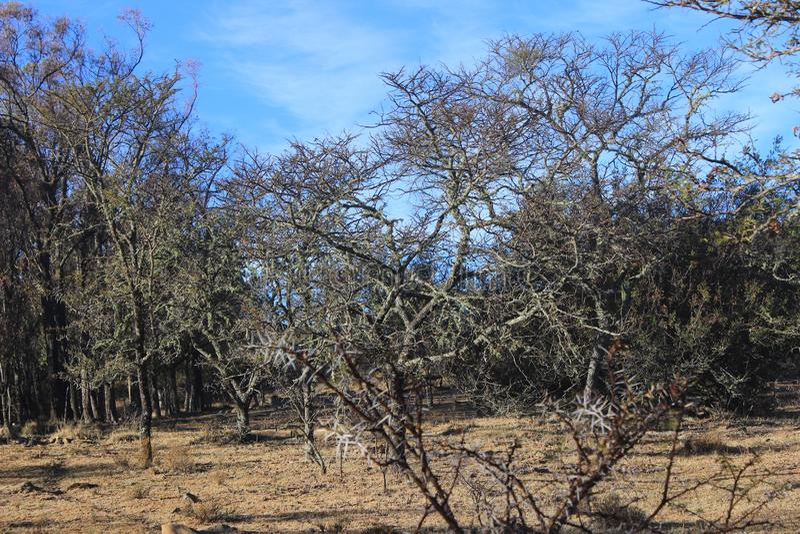 Gebrand en droog bos in Zuid-Afrika royalty-vrije stock afbeelding