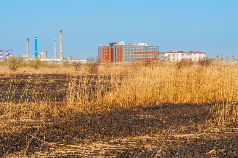 Gebrand gras in Vacaresti-delta van Boekarest royalty-vrije stock foto