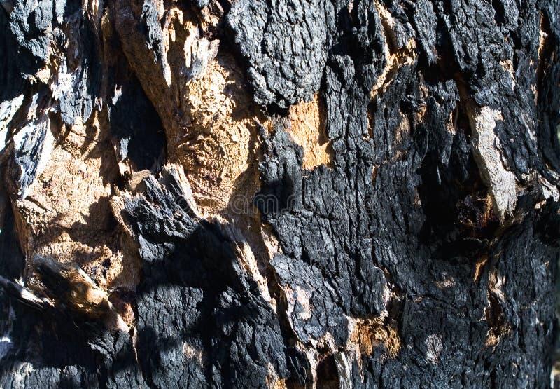 Gebrande schors van boom stock foto