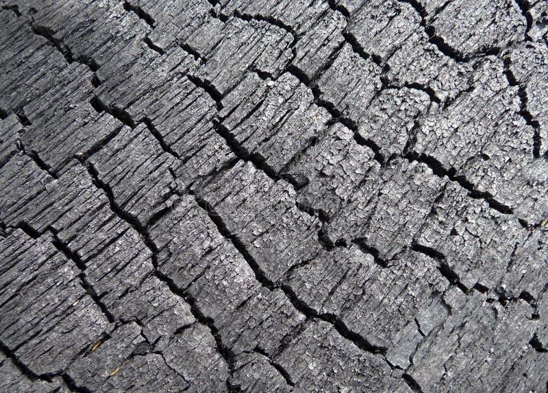 Gebrannte Baum-Barke 2 stockbilder