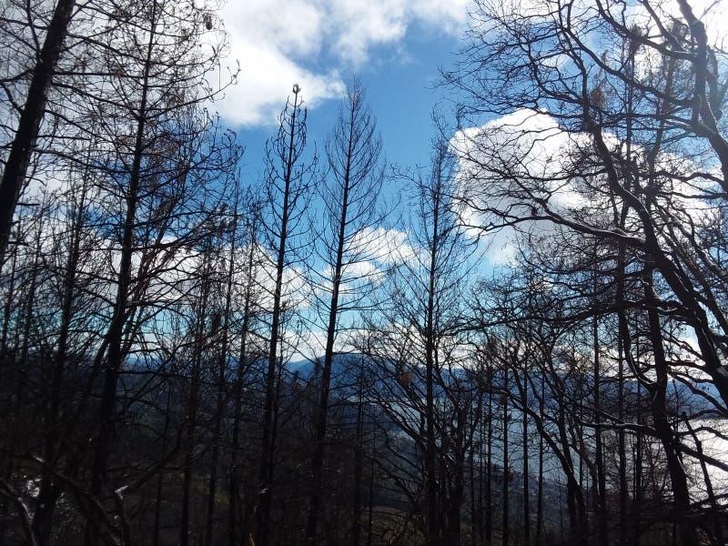Gebrannte Forrest-Bäume lizenzfreie stockfotos