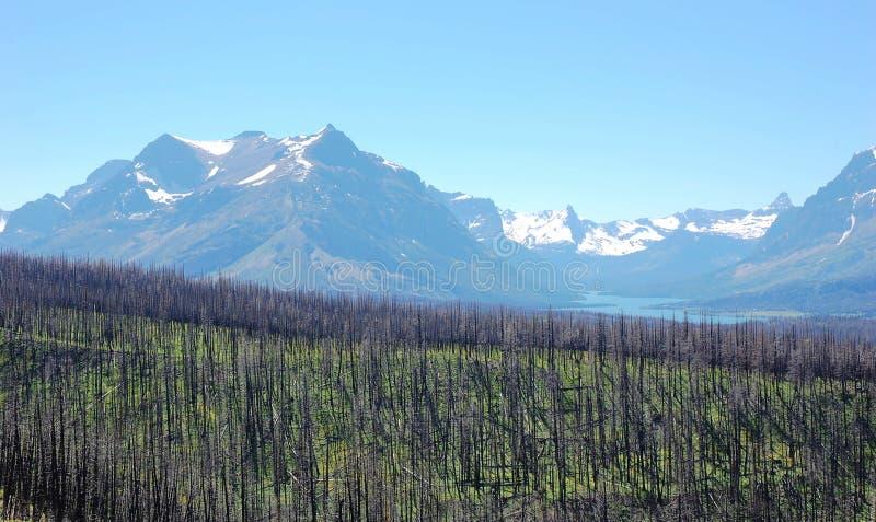 Gebrannte Wälder und Schneeberge stockbilder