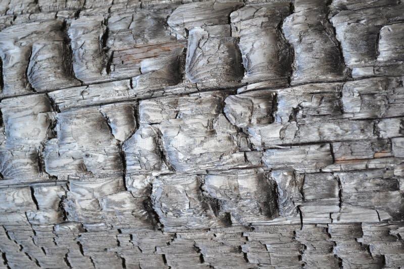 Gebranntes Holz nach einem Waldbrand als Warnung gegen Zerstörung lizenzfreies stockbild