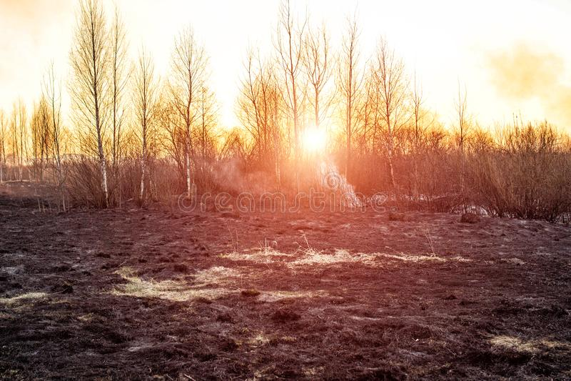 Gebranntes trockenes Gras in der Natur nach einem Feuer gegen den Hintergrund einer Glättungssonne eingestellt, die Gefahr von Wa lizenzfreie stockfotografie