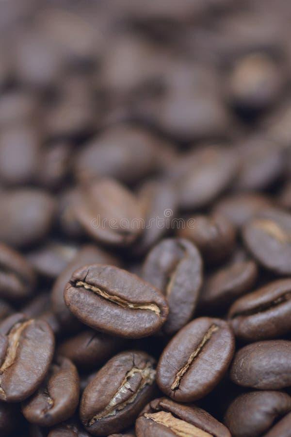 Gebratene indonesische Kaffeebohnen stockbild