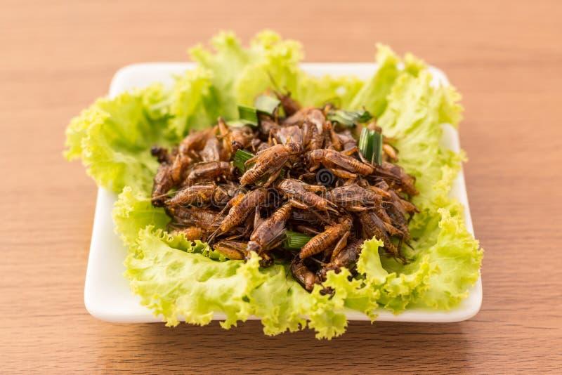 Gebratene Insekte stockfotografie