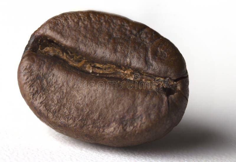 Gebratene Kaffeebohnen getrennt auf weißem Hintergrund Über Weiß In ganzer Tiefe vom Feld stockfoto