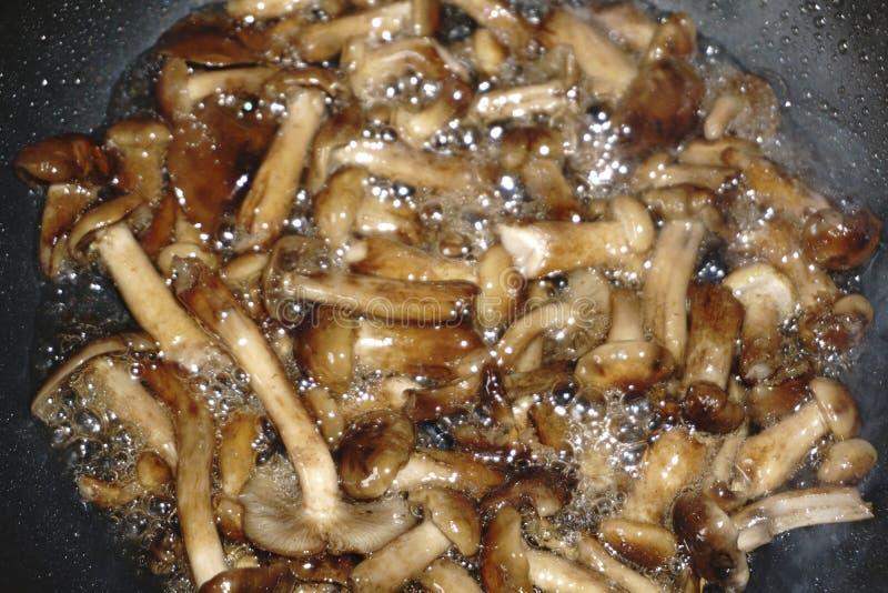 Gebratener Pilze Simmer in der Wanne lizenzfreie stockbilder