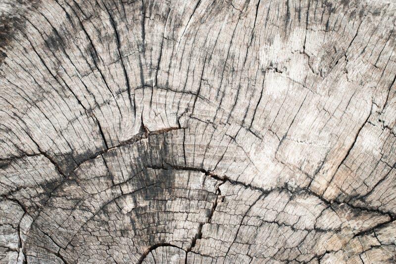 Gebrochene Beschaffenheit des alten Holzes Stumpfs des im Freien lizenzfreies stockfoto