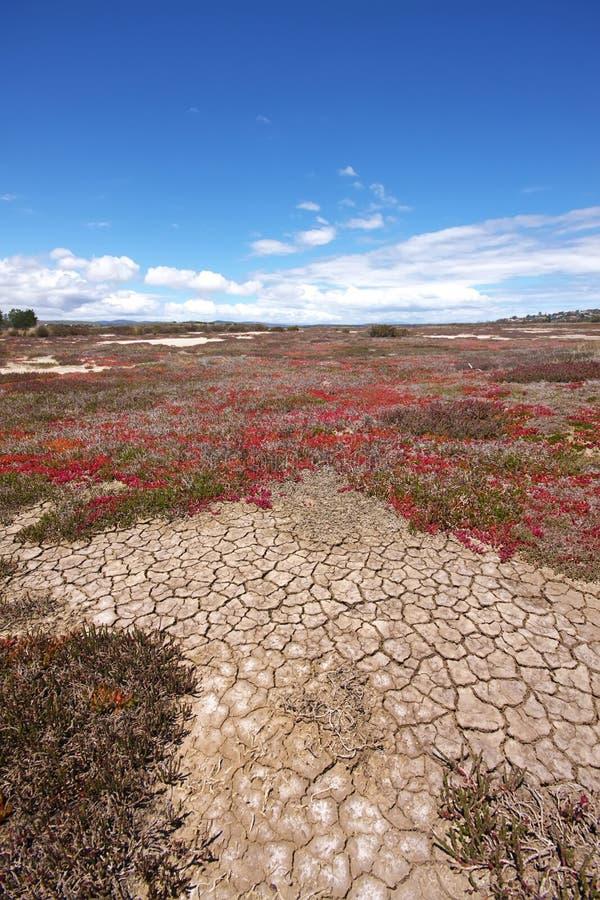 Gebrochene Erde in der Dürre, Tasmanien stockfoto