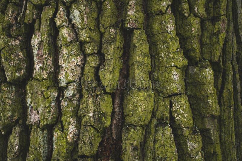gebrochener rauer grüner Baumrindehintergrund stockfotos