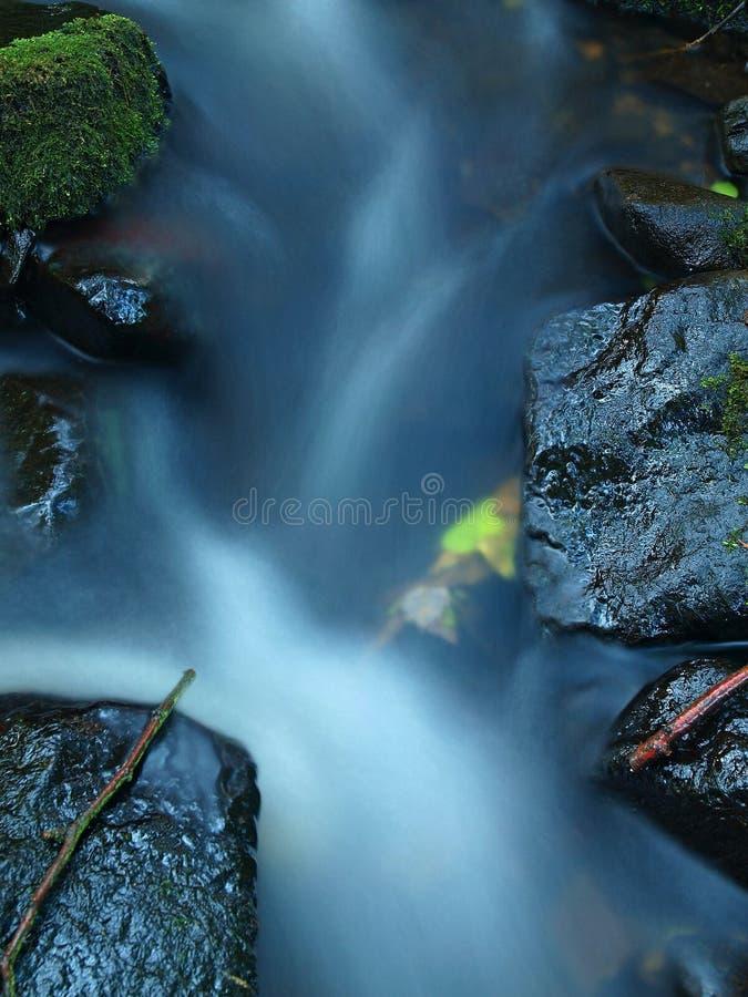Gebrochener Zweig auf nassem Stein unterhalb des erhöhten Wasserspiegeles.  lizenzfreies stockfoto