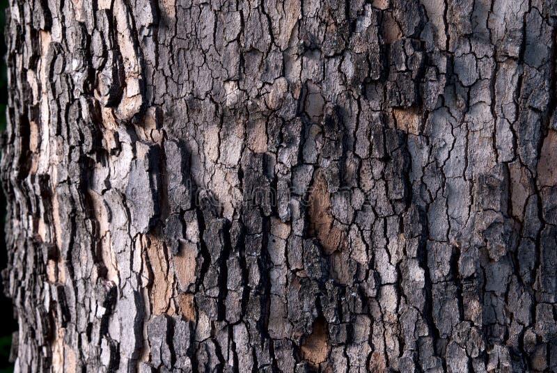 Gebrochenes Barkenmuster einer Platane lizenzfreies stockbild