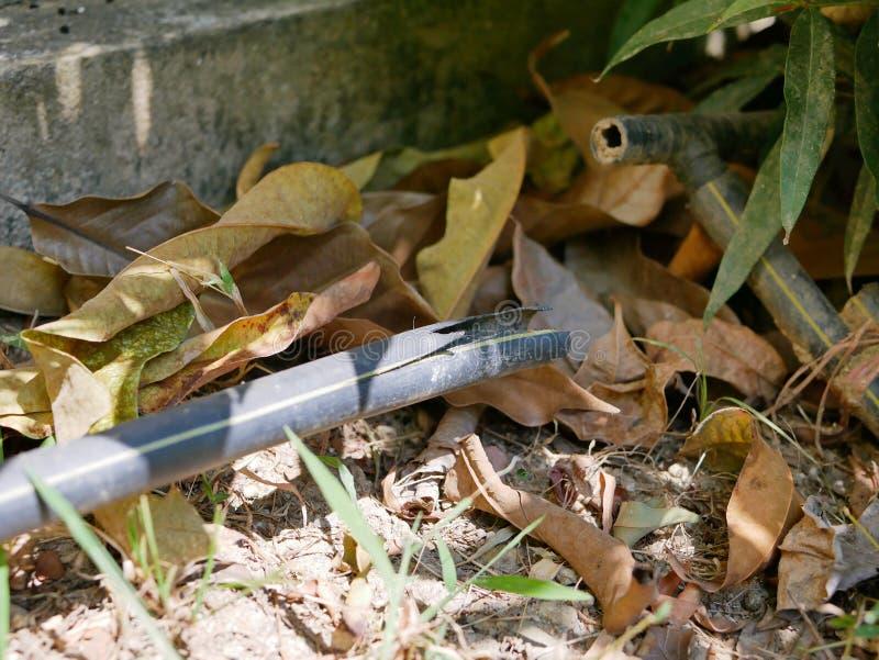 Gebrochenes schwarzes Kunststoffrohr des Polyäthylens, gesetzt über den Boden als Berieselungsanlagenlinie oder Teil eines Beries stockfoto