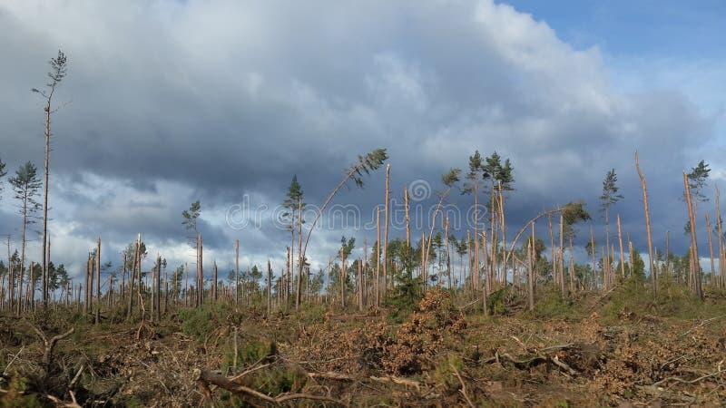 Gebroken bomen na een orkaan stock afbeelding