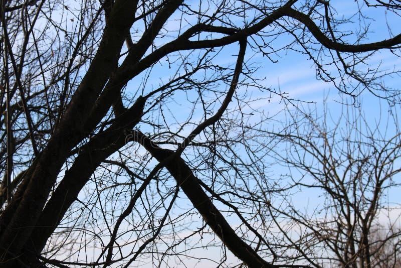 Gebroken boom stock afbeeldingen