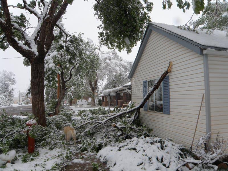 Gebroken Boom, de Schade van het de Winteronweer stock afbeeldingen