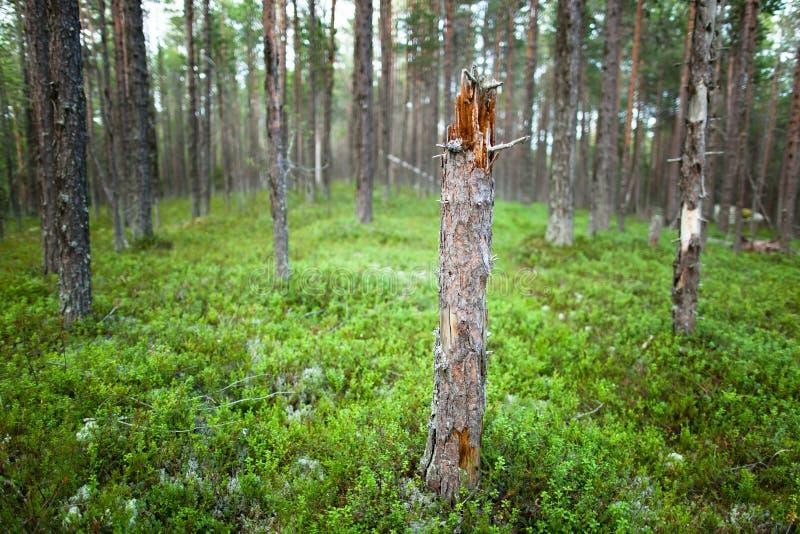 Gebroken boom in het hout royalty-vrije stock afbeeldingen