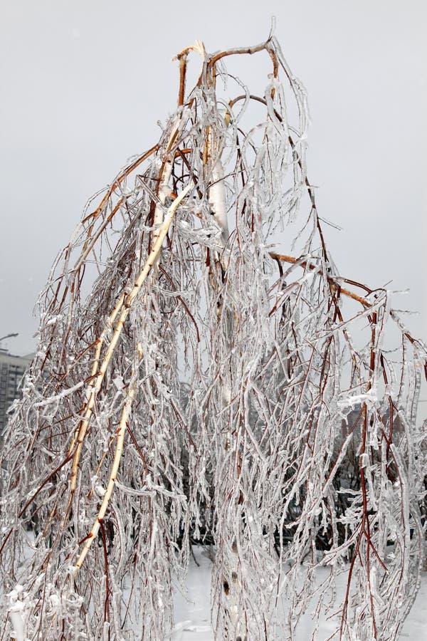 Gebroken boom na bevriezende regenonweer stock afbeelding