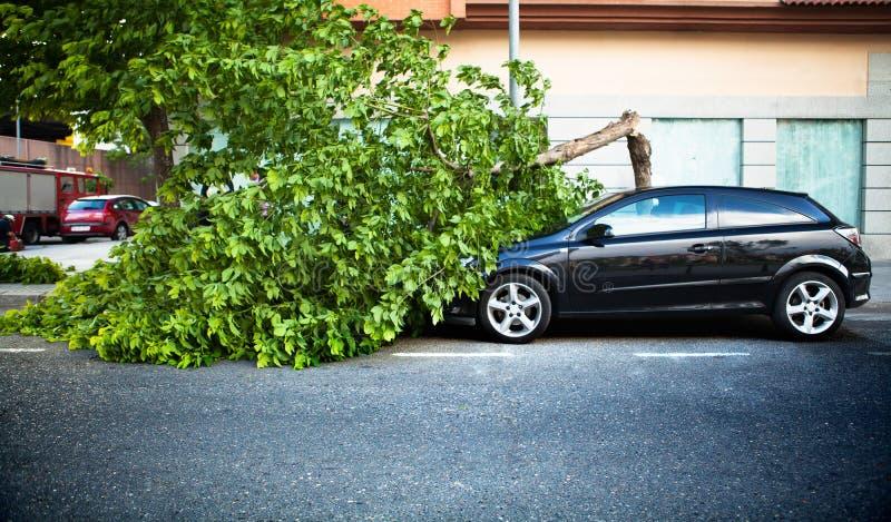 Gebroken boom op een auto, na een windonweer. stock afbeelding