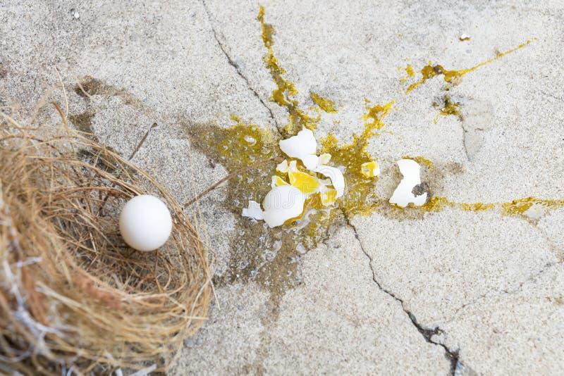 Gebroken eieren de vogel, het valt van nest met eierschaal en dooier van eierenvogel uit op de grijze steengrond Investering en royalty-vrije stock fotografie