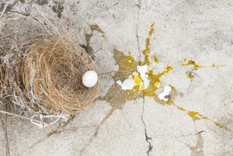 Gebroken eieren de vogel, het valt van nest met eierschaal en dooier van eierenvogel uit op de grijze steengrond Investering en stock foto's