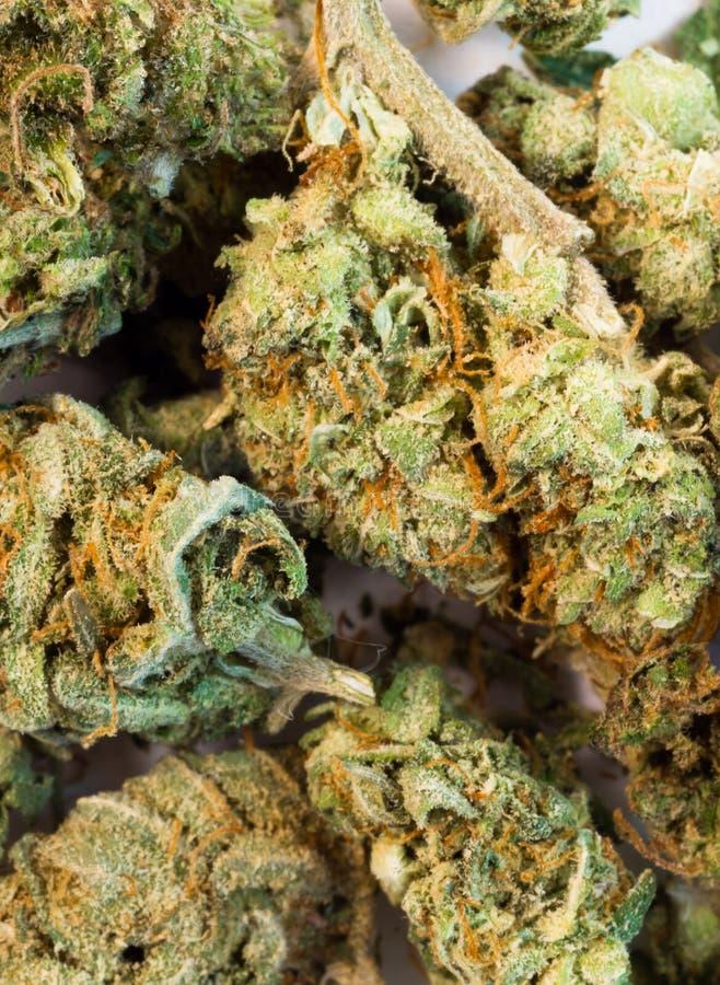 Gebroken Groene de Installatiebloemen Natuurlijke Cannibis van de Knoppenmarihuana royalty-vrije stock afbeeldingen