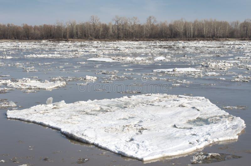 Gebroken ijs die op de rivier in de lente drijven stock foto